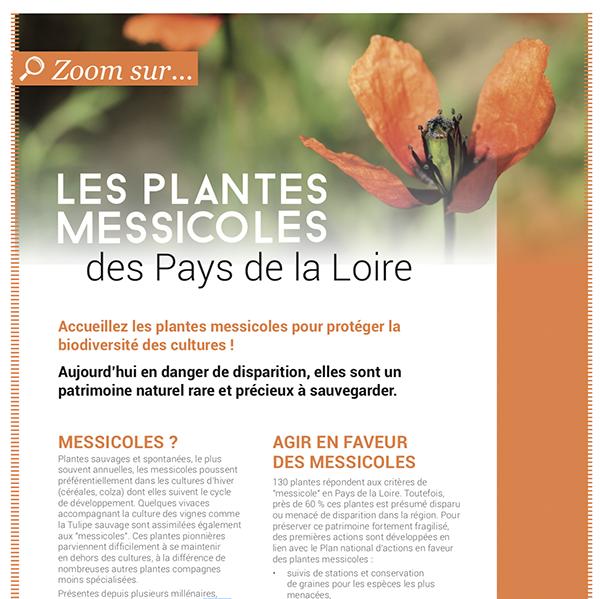 Les plantes messicoles en Pays de la Loire