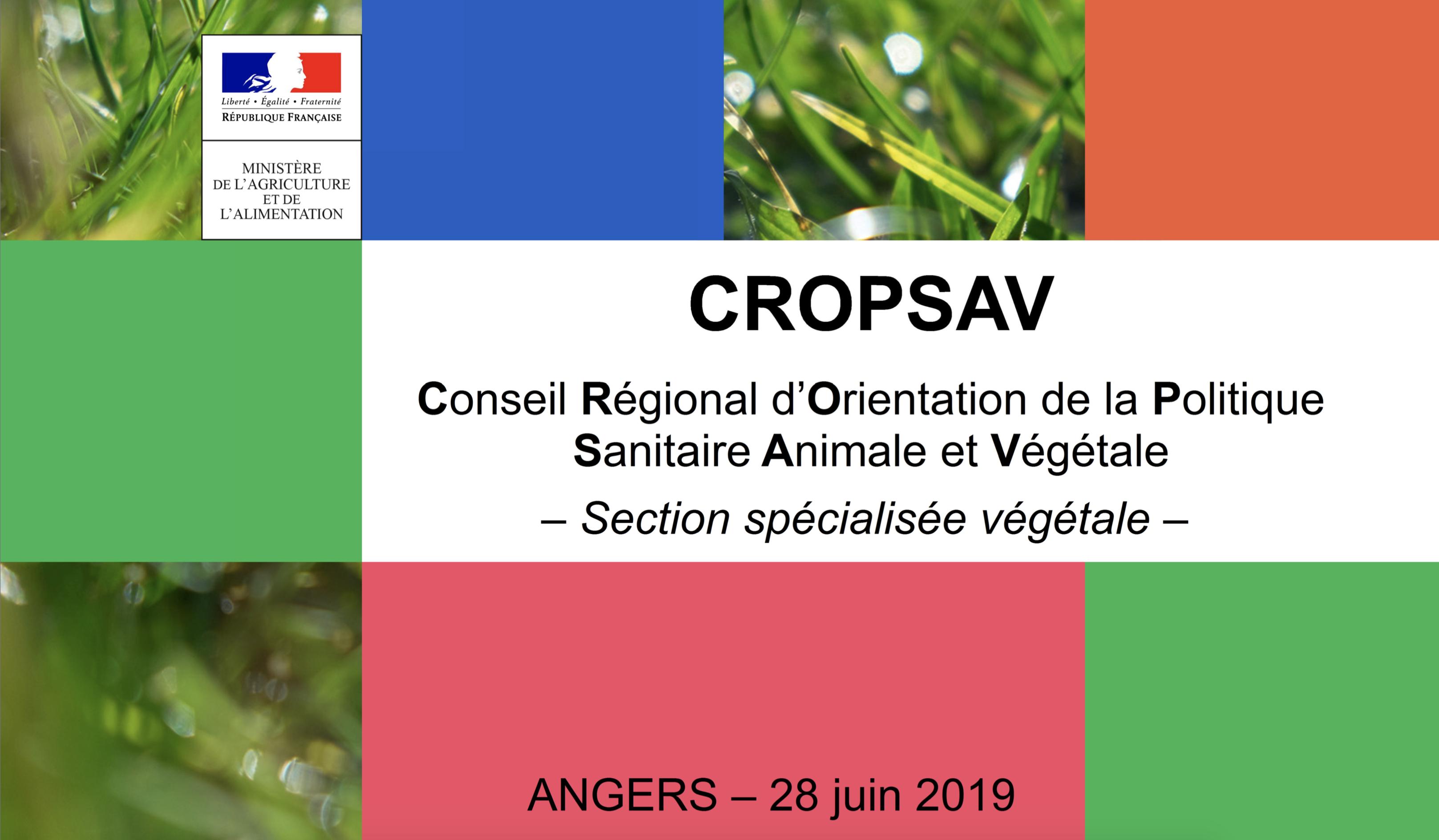 Retour sur le CROPSAV section végétale