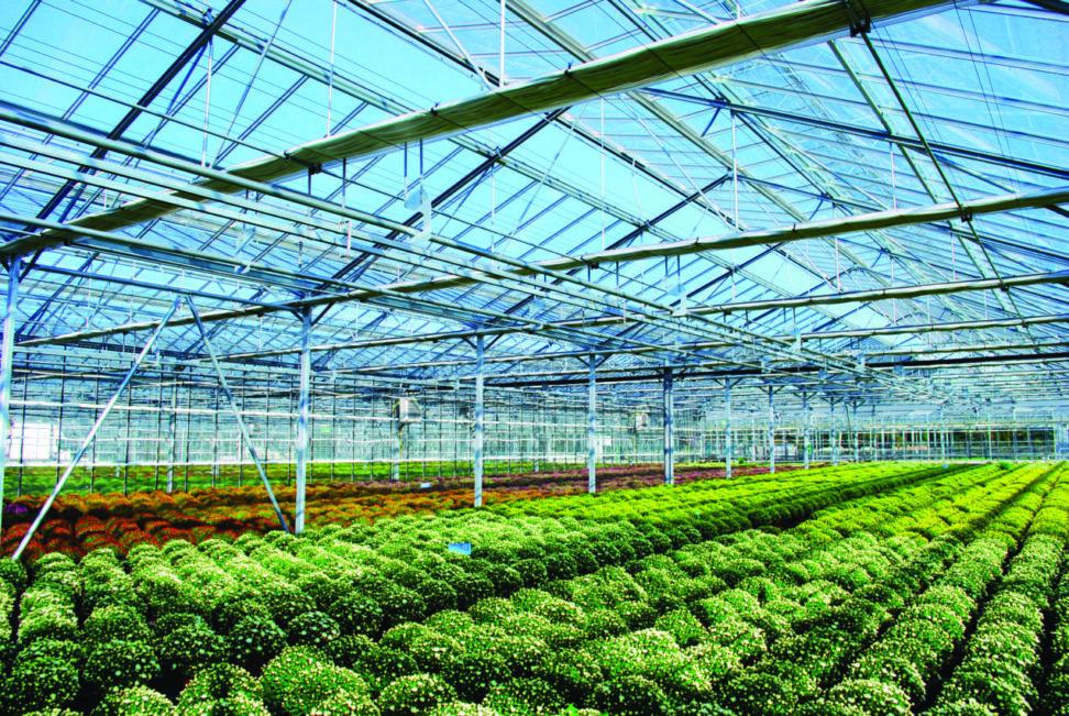 Actualités COVID-19 et soutiens aux entreprises de la filière végétale