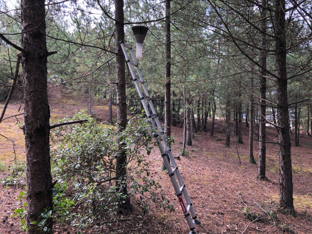 piège phéromones chenille processionnaire du pin